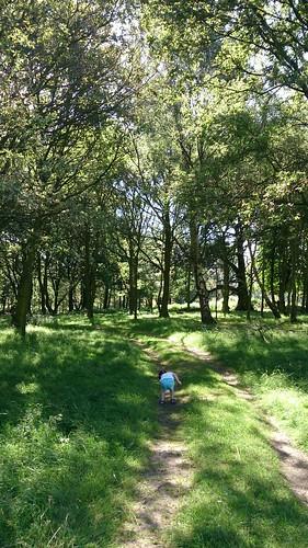 Gayles birthday walk around Wentworth Castle grounds