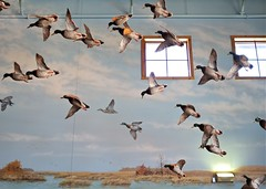 geese hunting reality illusions bassproshops deanhochman