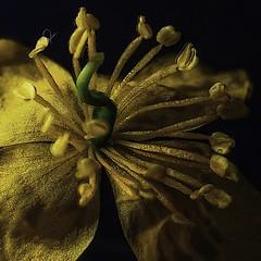 Bijou (domiloui) Tags: flowers flower macro nature fleur composition fleurs monochromatic panasonic lumiere couleur ambiance abstrait eclat cooliris abaucourt