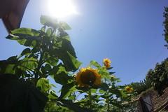 DSC08754 (RyanFranklinTits) Tags: birthday 4th july 2014 ryry