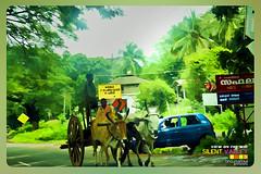Silent Valley---------------43 (Binoy Marickal) Tags: india green tourism nature water rain kerala mala palakkad evergreenforest treaking silentvalleynationalpark nilgirihills mannarkkad mukkali kuzhur indiabinoymarickal