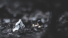 In the Swamp of Sadness (3rd-Rate Photography) Tags: canon toy 50mm lego florida 7d figure jacksonville minifig neverendingstory minifigure atreyu toyphotography artax earlware 3rdratephotography