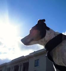 King of the castle (Charly Hund) Tags: summer dog castle nature charly farmdog slott gunnebo dansksvensk grdshund
