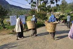 06-12-DSC4470 (jo_chen_w) Tags: woman women tea srilanka frau lk tee 2012 hatton teaplantation frauen centralprovince teeplantage nuwaraeliyadistrict madhyamapalata nuwaraeliyadistrictcentralp nuwaraeliyadistrictcentralprovince       malaiyakammaakaanam