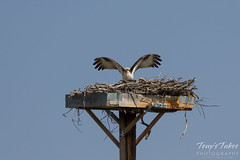 Osprey landing sequence - 12 of 14