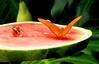 Eating (copito_m) Tags: naturaleza color nature animal nikon close animales mariposa mywinners abigfave aplusphoto