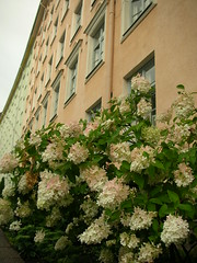 Pastel flowers and houses (Kimmo Risnen) Tags: from camera flowers colour nikon pastel coolpix s1 straight
