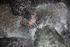 Splash # 2 (Debmalya Mukherjee) Tags: rain waterfall bath caves monsoon bathing splash mumbai kanheri sanjaygandhinationalpark sgnp 18135 canon550d debmalyamukherjee borevelli