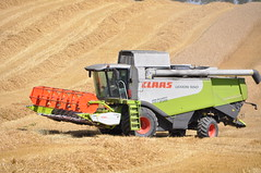 Claas Lexion 550 Combine Harvester cutting Winter Wheat (Shane Casey CK25) Tags: county ireland winter horse irish field work golden hp corn nikon power cut farm cork wheat farming grain working harvest straw till crop combine cutting land crops farmer blade agriculture dust pulling contractor chaff collect blades harvester collecting tilling harvesting 550 claas agri d90 lexion tillage killavullen harvest2014