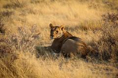 Namibia-2600 (Francesca Braghetta) Tags: africa travel desert dunes lion namibia viaggi travelblog etosha himba namib avventure viaggiare avventurenelmondo viaggiavventurenelmondo sussveil inviaggioconfrancesca