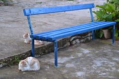 Croatia Cats (..polina) Tags: summer t mare estate natura sole croazia gatti panchina