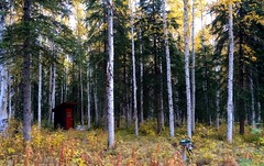 My Outhouse (toofarout) Tags: autumn trees fall alaska paper birch outhouse spruce fairbanks iphone outhouses interioralaska goldstreamvalley