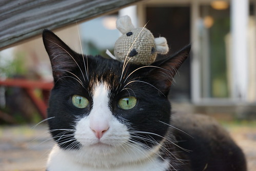Cat and Mouse by katie_mccolgan, on Flickr
