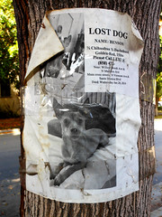 Name: Benson (~db~) Tags: california urban usa dog pet chihuahua tree animal sign america paper poster lost la words losangeles missing unitedstates name text letters dachshund socal benson reward virgilvillage s6100100dscn8992 namebenson