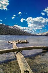 Tenaya Lake (TerryBon) Tags: park usa lake adam classic nature beautiful america landscape shot great sigma national yosemite merrill tenaya dp1m asnel