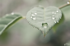 Autumn rain (Ali Llop) Tags: autumn macro verde green fall hoja leave rain lluvia drop otoño gota
