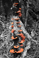 Fun Guys (chriswhittle80) Tags: white black colour tree nature southafrica fungus splash phantomforest