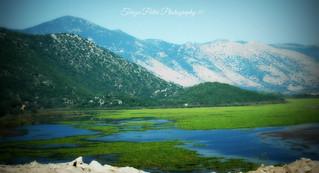 Swamp Kalodikiou, Thesprotia, Greece
