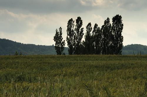 Feld 8