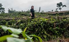 Vietnam: climate-smart village building resilience