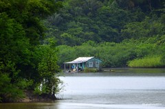 Palafitta sul Rio Delle Amazzoni (Liv ) Tags: rio brasil river fiume brasile 2014 delle amazzonia amazzoni laivphoto
