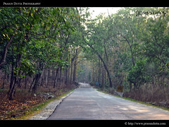 Nice Roads of Sikkim (PrasunDutta) Tags: road blue sky cloud india snow tree ice forest nikon hill north colorphotography cloudscape sikkim gangtok d90 prasun lachung nikond90 yungtham prasundutta prasunsphotography