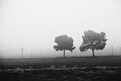 the fog (Simy _Elisewin) Tags: street white black fog nebbia