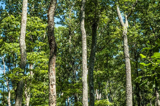 Jackson-Washington State Forest - Plattsburg Pond Trail - June 25, 2014