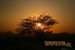 Universe (SaadUmair) Tags: pakistan sunset tree savana cholistan