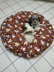 Jackson testing outt baby Primo's new bed