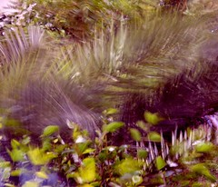 Palms in wind.. (Matej Reviliak) Tags: summer abstract motion blur color nature leaves palms movement wind