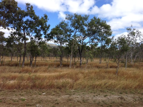 Cape York, Woodland 1