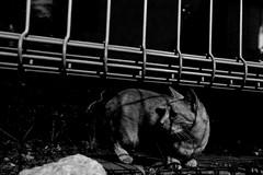 kitten (Nakagawa Takuma) Tags: bw monochrome japan photography tokyo blackwhite  sugamootsuka sonydscrx100m3  takumanakagawa