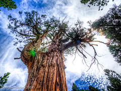 Sequoia National Park (dugm2) Tags: california park trees mountains forest national sequoia