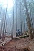 Above (fbcanada33) Tags: mountain bike vancouver bc mtb fromme