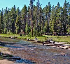 Meadow on Gibbon River, Yellowstone 9-11 (inkknife_2000 (6 million views +)) Tags: usa landscape driftwood pines yellowstonenationalpark streams forests riverrock mountainstreams deadfall gibbonriver dgrahamphoto