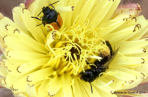 Insects in Yellow Flower