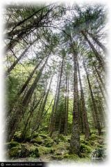 tablir la mesure des choses (Mathieu Muller) Tags: trees backlight forest landscape perspectives wideangle arbres fusion paysage hdr fort contrejour grandangle tonemapping pointdefuite lignedefuite mathieumuller wwwmathieumullercom