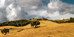 two trees (rey perezoso) Tags: cloud tree landscapes andalucía andalusien 2014