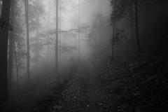 THE FOG (director's cut) (Toni_V) Tags: wood bw monochrome fog schweiz switzerland blackwhite europe nebel suisse hiking 28mm rangefinder jura svizzera wald wanderung m9 neuenburg 2014 svizra sep2 elmaritm 140906 niksoftware messsucher ©toniv leicam9 phvalue jurahöhenweg l1018544 noiraiguestecroix