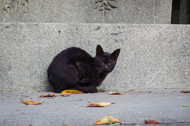 Today's Cat@2014-09-15