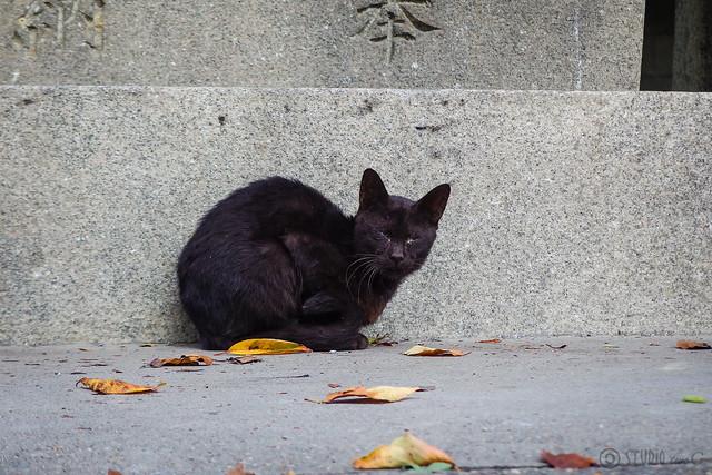Today's Cat@2014-09-15