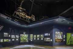 Houston Zoo Insectarum Interior 3 (Mabry Campbell) Tags: usa architecture photography zoo photo texas photographer exterior realestate unitedstates image interior room houston insects august photograph commercial inside 100 client bellows fineartphotography f63 2014 tiltshift architecturalphotography 17mm insectarium enclosures commercialphotography commercialrealestate commercialarchitecture commercialproperty 25sec commercialexterior architecturephotography commercialinterior houstonphotographer porticogroup wsbellows tse17mmf4l mabrycampbell august222014 wombathouse 20140822h6a7987