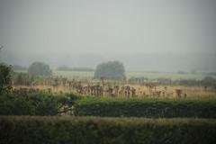 foggy days (dacfinger) Tags: fog germany landscape seaside nikon df f28 kiel 70200mm dacfinger