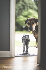 Get in the house! (3rd-Rate Photography) Tags: dog brick canon outside 50mm starwars mutt lego florida lucas 7d jacksonville atat empirestrikesback hoth 75054 earlware 3rdratephotography