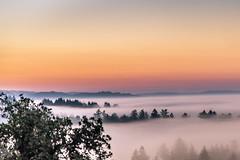 Morning blanket of fog over trees (dhc_photos) Tags: morning trees sky santacruz fog sunrise foggy morn fogg