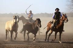 Gauchos (Pablo Urrea) Tags: luz argentina caballos buenosaires artistica gauchos cultura tarde