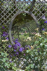 Doubles (Francine Schumpert) Tags: flowers plants nature garden vines ovals trellis biltmoreestate lookingthrough nikond810