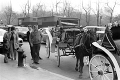 0401b71 06 (ndpa / s. lundeen, archivist) Tags: nick dewolf nickdewolf bw blackwhite photographbynickdewolf film monochrome blackandwhite newyork newyorkcity nyc city manhattan candid streetphotography citylife people april 1971 1970s 35mm horse horses horsedrawn carriage carriages streetlife hydrant firehydrant street cars vehicles automobiles traffic taxi taxis cab cabs park trees centralpark men woman women