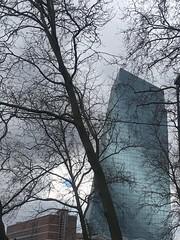 Ecb Europäische Zentralbank Frankfurt Frankfurt Am Main Meine Stadt Hochhäuser Skyscrapers Winter Winter Trees at Europäische Zentralbank (EZB) (Herb_Foxley) Tags: ecb europäischezentralbank frankfurt frankfurtammain meinestadt hochhäuser skyscrapers winter wintertrees